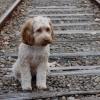 Veterinários pedem incentivos fiscais para quem tem animais