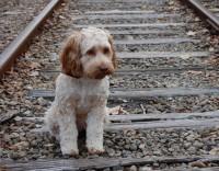 Donos de cães perigosos vão ter de frequentar formação específica