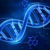 Base de dados de perfis de ADN conseguiu mais de oito mil amostras em quase sete anos