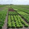 Agricultores ganham mais tempo para declararem início de actividade