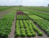 Prazo para agricultores se registarem nas Finanças adiado para outubro