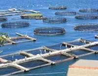 Governo quer reduzir para três meses licenciamento de aquiculturas