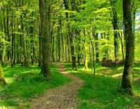 Conselho de Ministros aprova reforma do setor florestal