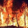 Plano nacional contra incêndios sem avaliação há quatro anos