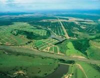 Reforma das florestas em consulta pública até 31 de janeiro