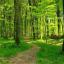 GNR registou no ano passado 308 infrações em parques naturais